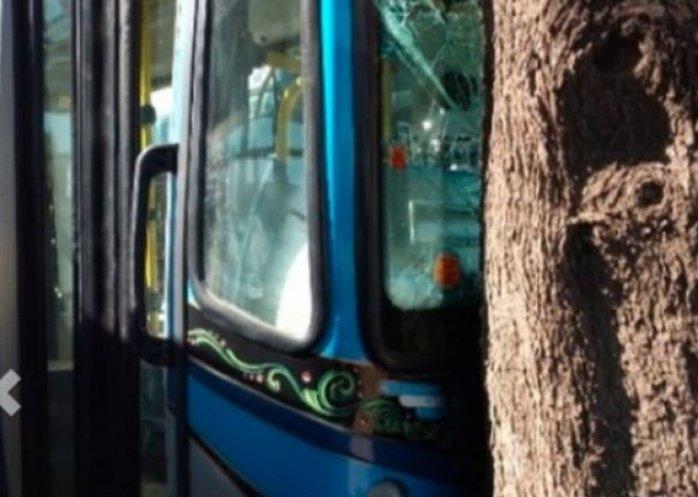 foto: Pusieron en marcha colectivos y los chocaron contra árboles
