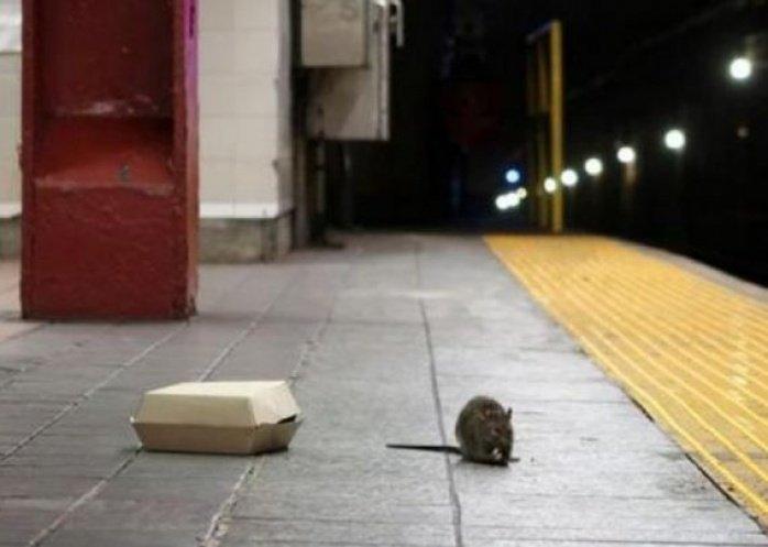 foto: Rara enfermedad relacionada con ratas: alerta en Nueva York